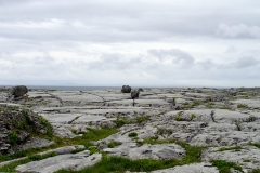 Irland - Küstenlandschaft The Burren