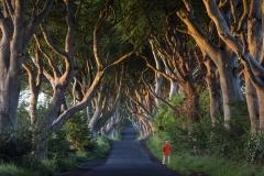 The Dark Hedges - County Antrim - Northern Ireland